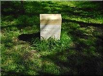 NS5575 : Home: Mary Broadie by Richard Sutcliffe