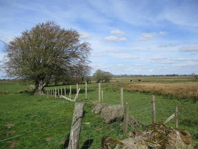 Pasture land near Cladance