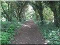 TQ7062 : Woodland Path by John P Reeves