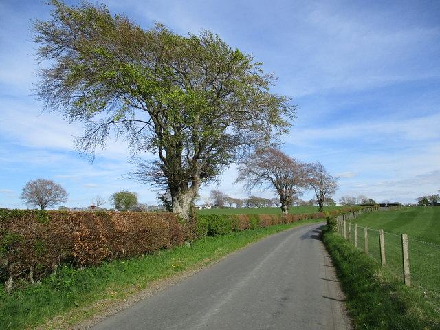 Roadside trees, Shawtonhill