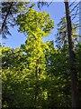 TF0820 : A column of green fire by Bob Harvey