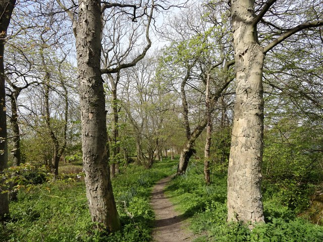 Path through the trees in the park