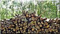 TQ1425 : Pile of logs in Marlpost Wood by Ian Cunliffe