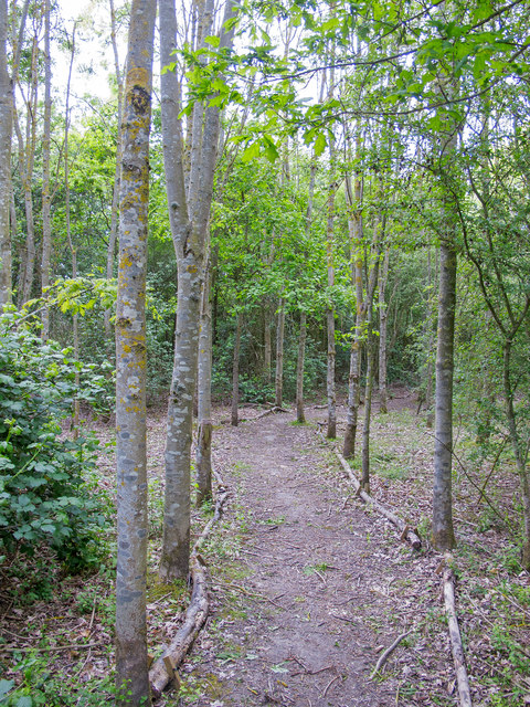Path in Woodland near Thames Chase Forest Centre (Broadfields)