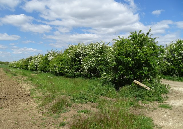 Hawthorn hedgerow in the parish of Redbourne