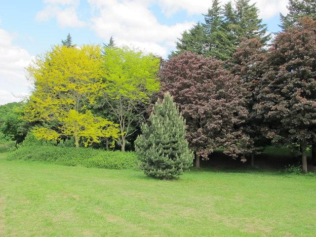 Trees in Hanger Hill Park, Ealing