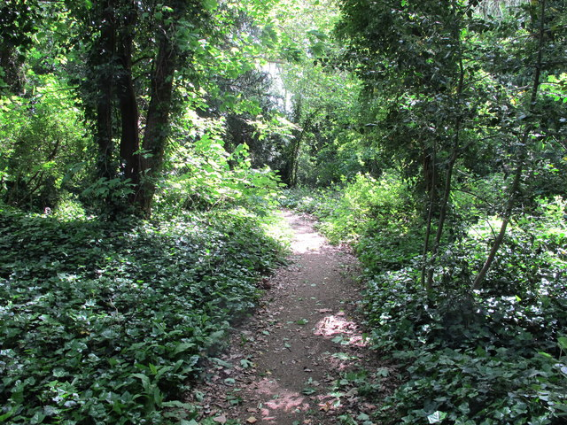 Path in Hanger Hill Wood (Chatsworth Wood)