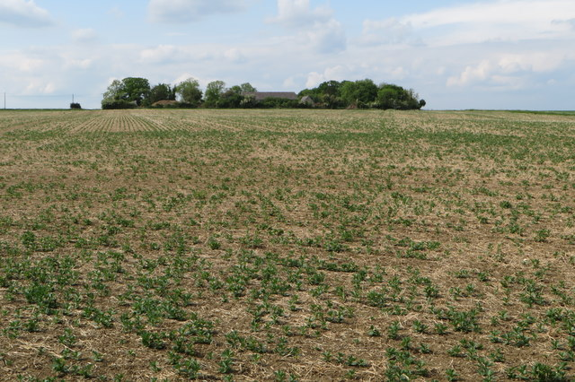 Tythe Farm at the top of the field
