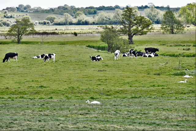 Mendham: Grazing land by the River Waveney