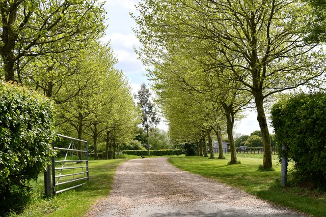 Brundish Street: Tree-lined entrance to Moat Farm