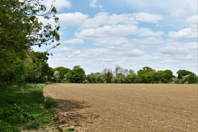 Ashfield Green: Ploughed field next to Wilby Hall