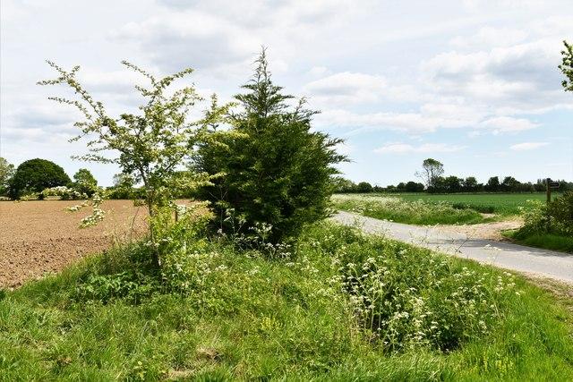 Ashfield Green: Very deep, dry drainage ditch
