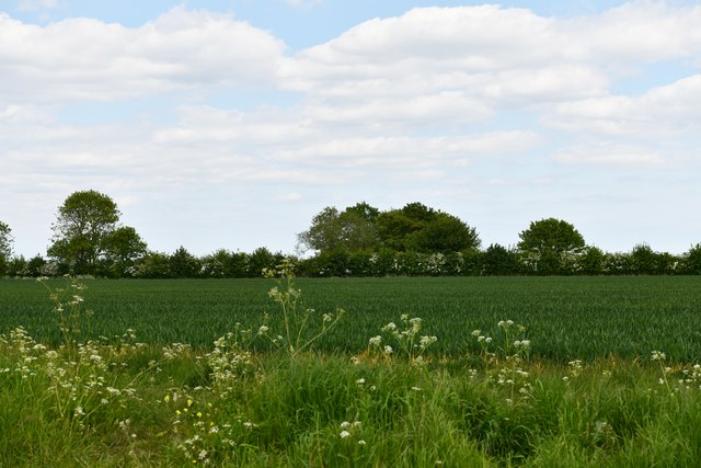Tannington: Cereal crop