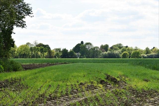 Southolt: Cereal crop