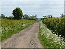 SK6736 : Farm track towards the Cropwells by Alan Murray-Rust