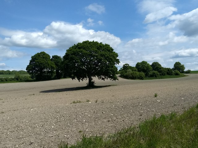 Oak tree and copse in ploughed field South East of Langrish