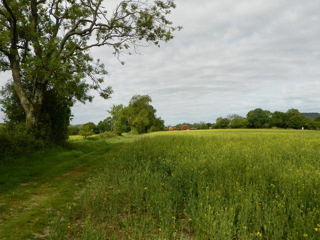 Looking across field towards New Barn