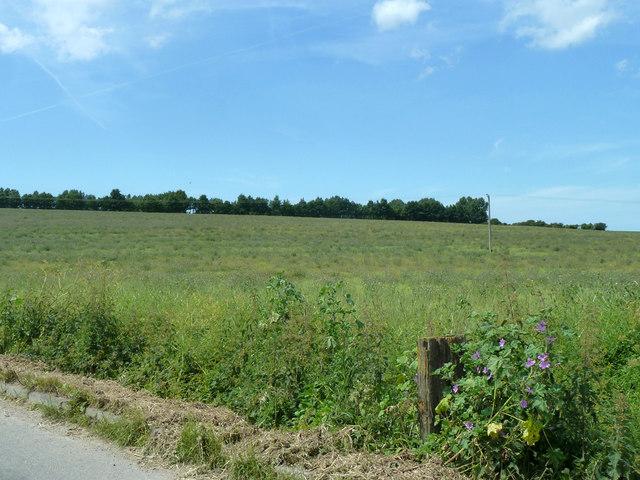 Fallow field north of Heronden
