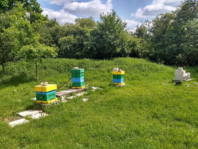 Colourful beehives below Soal Farm
