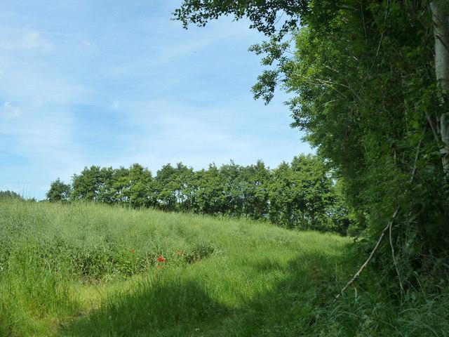 Small field near Heronden