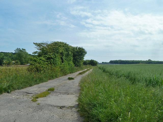 Track to Little Tickenhurst Farm