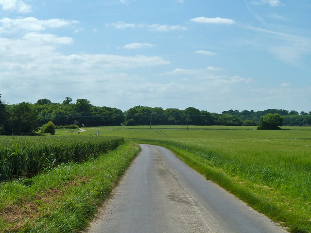Lane towards Goodnestone