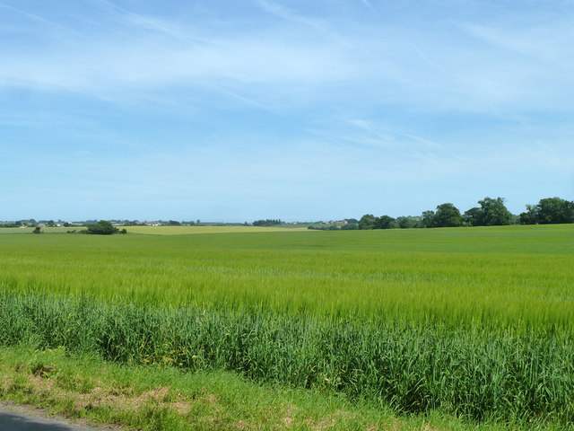 Barley field east of Buckland Lane