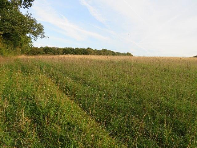 Fields west of Pardown Copse