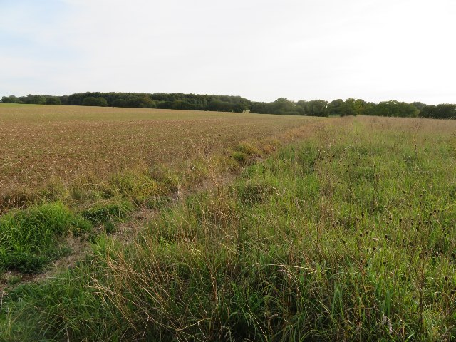 Arable field / wildflower margin