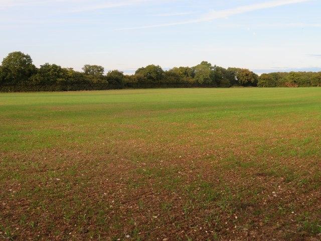 View across Moore's Field (9 acres)