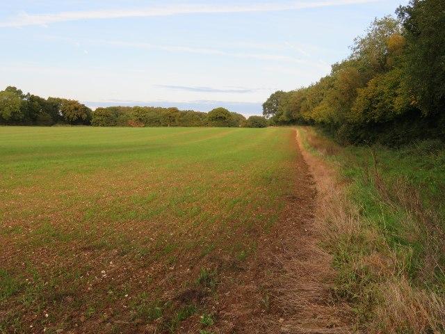 Moore's Field (9 acres) / Pardown Copse by Sandy B