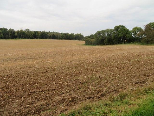 Farmland south of Wych Hazel Copse