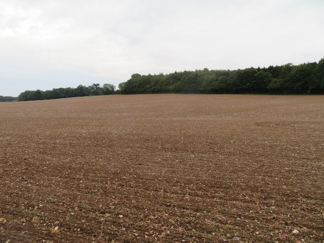 Farmland south of Wych Hazel Copse