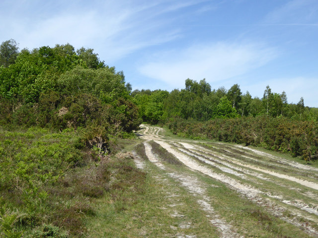 A major track, Ashdown Forest
