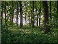 TL5002 : Woodland near bridleway, Mill Lane, Toot Hill by Roger Jones