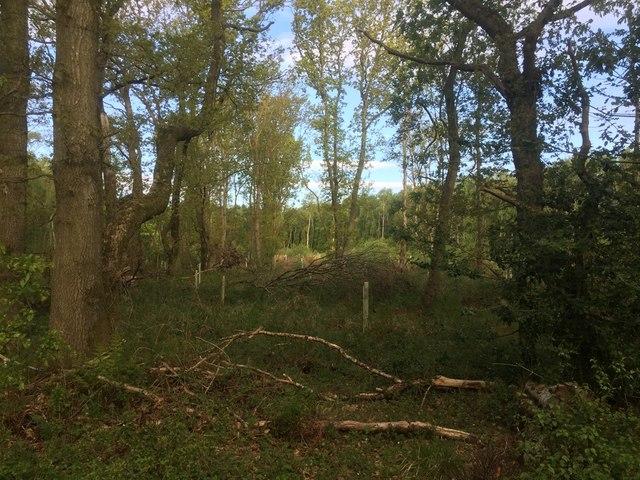Cuddie Wood