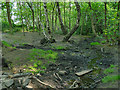 SE2538 : Stream in Spring Wood by Stephen Craven