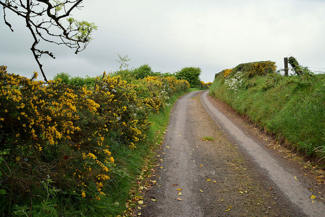 Whins along Tycanny Road