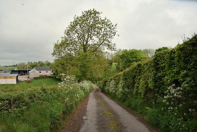 Tall hedge along Tycanny Road