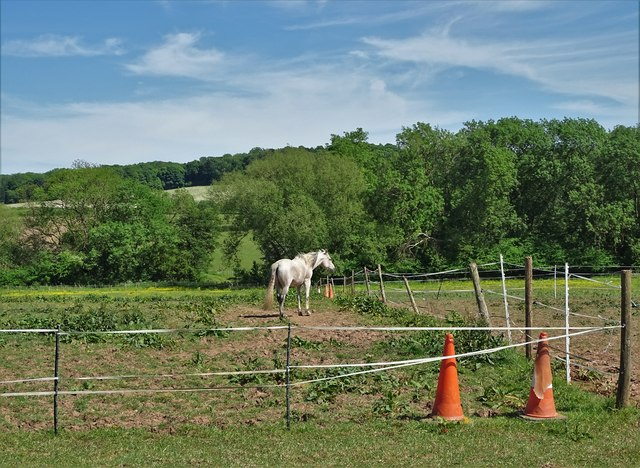 Horse in pastures east of Far Lane