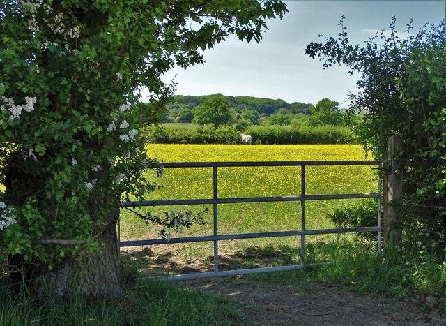 Field north of Moor Lane, Dale Abbey