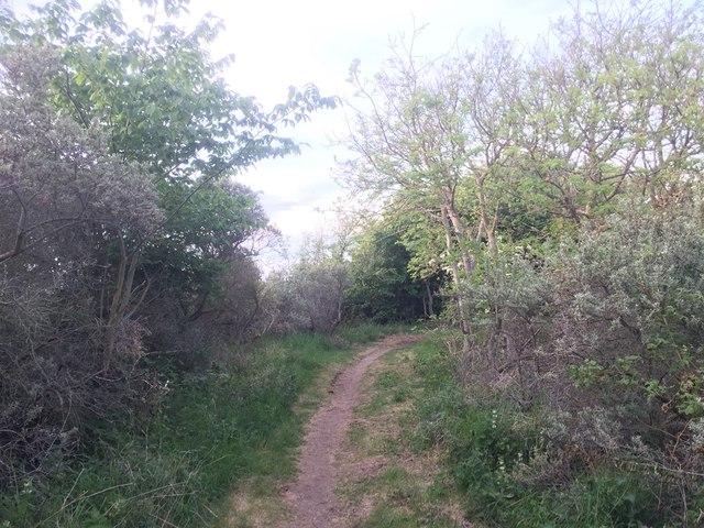 Path, Longniddry Bents