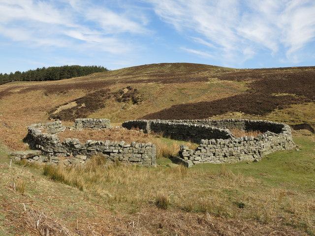 Sheepfold below Washpool Hill (3)