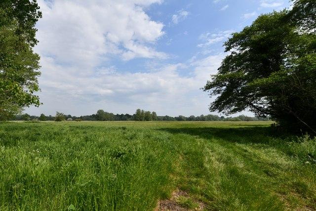 Oakley: Field with grass