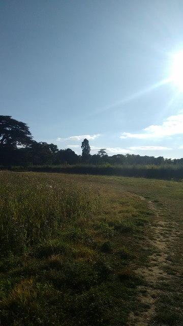View towards woods in Panshanger Park
