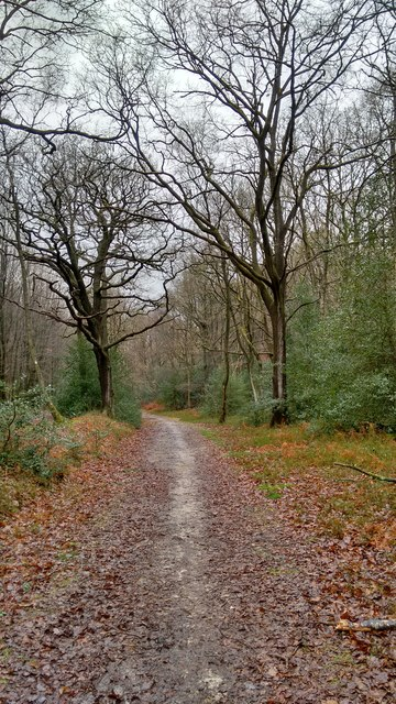 Track through Durford Wood