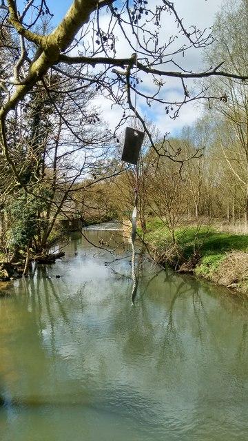 Strange trinkets hanging in a tree by River Avon at Stareton