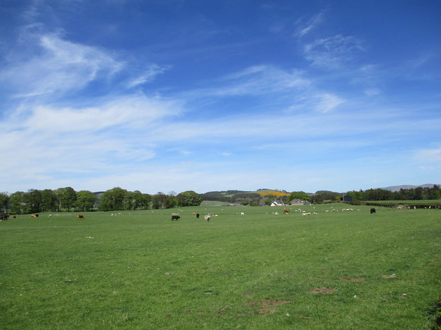 Sheep and cattle grazing, near Symington