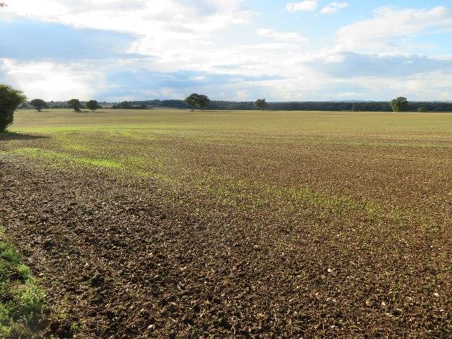 Farmland north of North Waltham