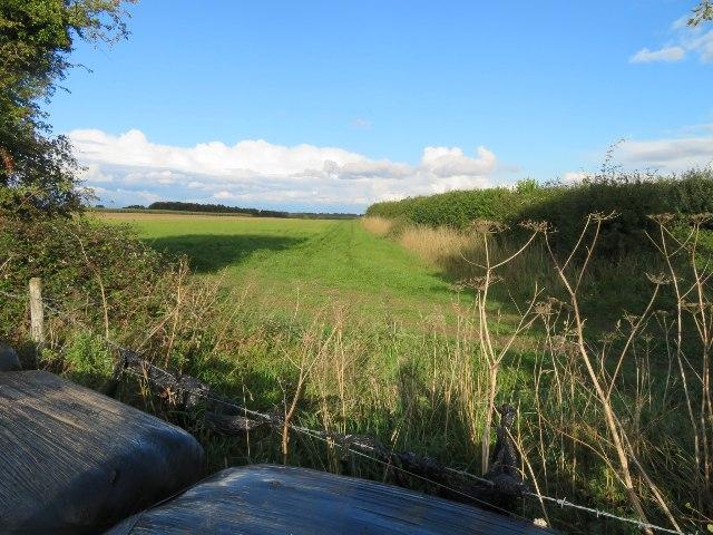 Farmland east of North Waltham